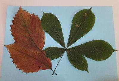 Bild aus Blättern - Basteln mit Naturmaterial